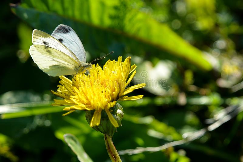 Цветы живут флора земля природа стоковая фотография