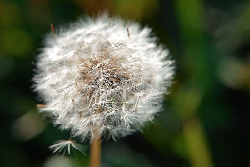 Цветы живут флора земля природа стоковое изображение rf