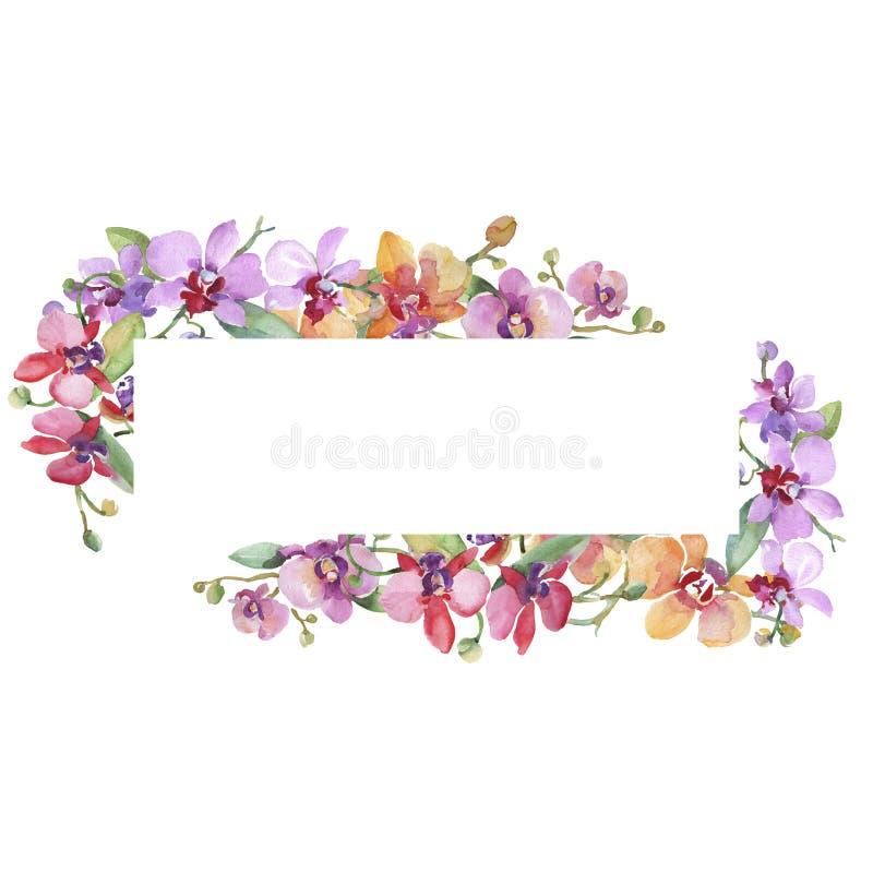 Орхид букет цветочные ботанические цветы Набор иллюстраций цвета воды Граница рамки бесплатная иллюстрация