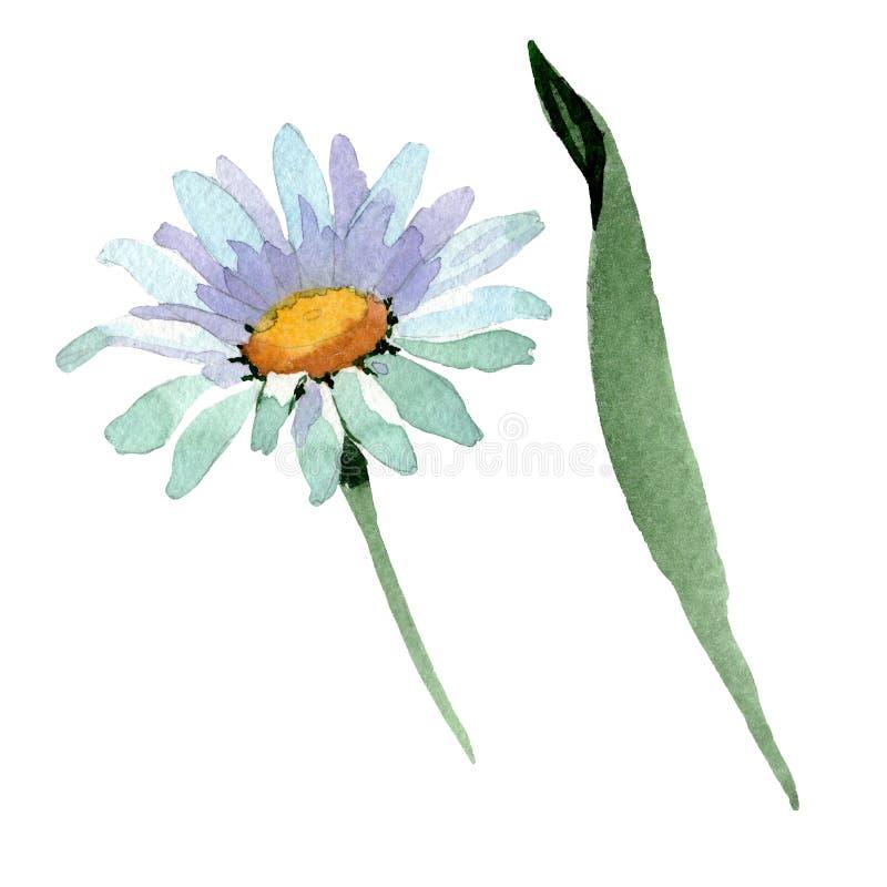 Большие белые ромашковые цветочные ботанические цветы Цвет воды Изолированный элемент иллюстрации ромашки иллюстрация штока