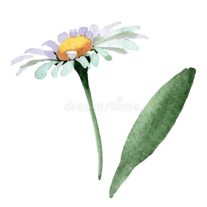 Большие белые ромашковые цветочные ботанические цветы Цвет воды Изолированный элемент иллюстрации ромашки бесплатная иллюстрация