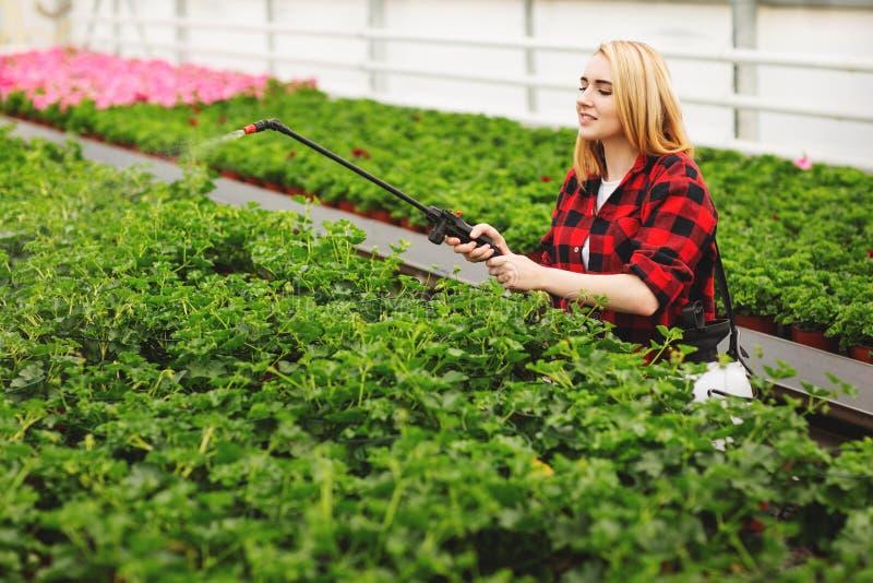 Девушка распыляет растения Девушка работает в теплицах Заводы по производству удобрений стоковые изображения rf