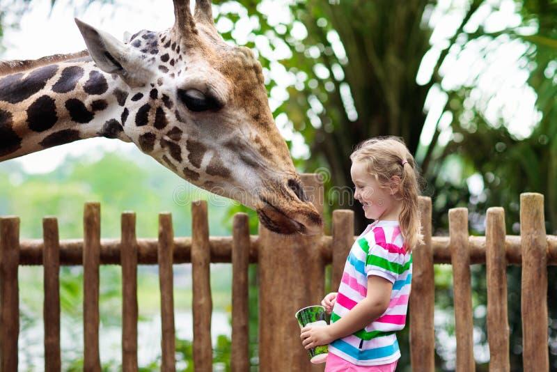 孩子在动物园喂养长颈鹿 徒步旅行队公园的孩子 免版税图库摄影