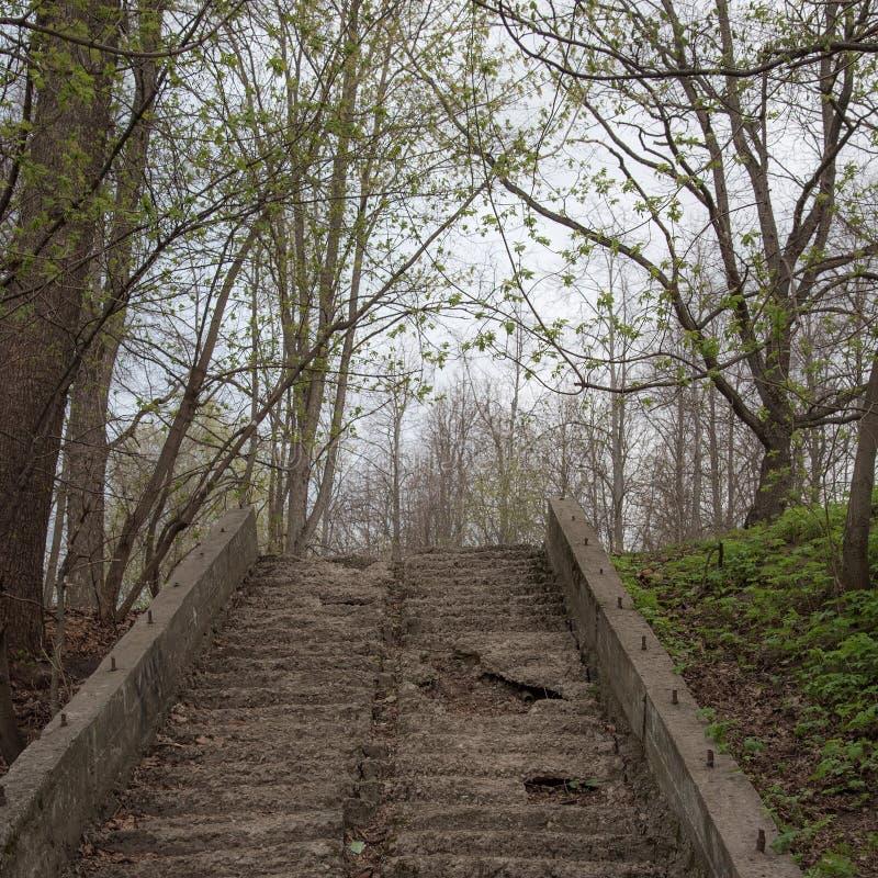 Stare schody w parku ze schodami rujnowanymi, kruczącymi i zatopionymi Sponury, mistyczny toning Pojęcie dewastacji zdjęcie royalty free