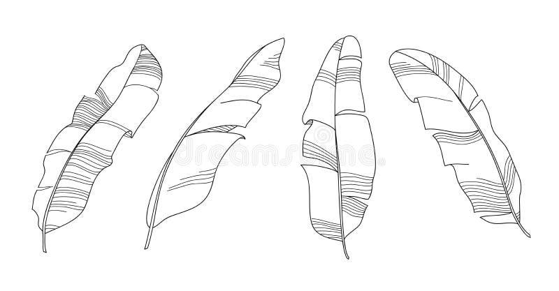 香蕉离开概述传染媒介例证 黑白手拉的线艺术 设置剪影热带叶子骨骼 皇族释放例证
