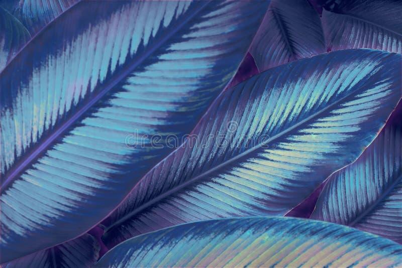 Kaszalot neonowy Awatar jak neonowa dżungla Neon Światła 80`s obrazy royalty free