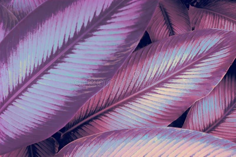 Kaszalot neonowy Awatar jak neonowa dżungla Neon Światła 80`s zdjęcie royalty free