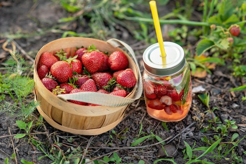 Jordgubben och mintkaramellen ingav detoxvatten jordgubbelemonad med is och mintkaramellen som den förnyande drinken för sommar i royaltyfria bilder