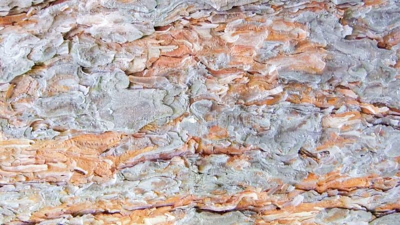A árvore de Larch jovem de casca de pé na primavera Fortes dobras, Textura da Natureza Textura detalhada da luz de casca fotografia de stock