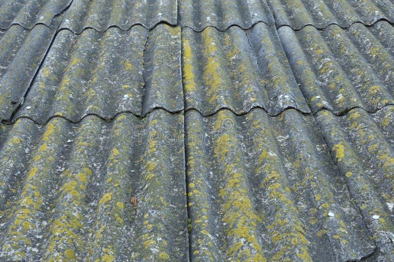 Taket av ett landshus som täckas med grå färger, kritiserar, närbilden Det gamla taket som täckas med, kritiserar Grön mossa växe royaltyfri bild