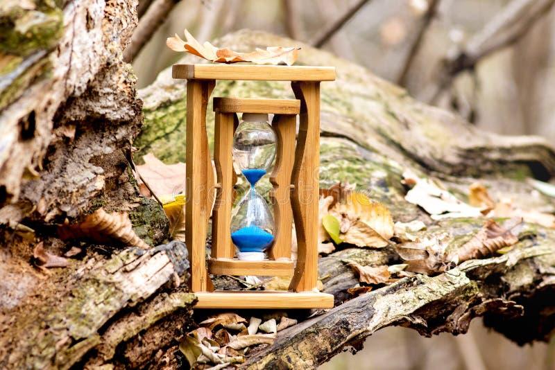 As areias cronometram nos ramos de uma árvore velha na floresta na queda O tempo é fast_ de vinda fotografia de stock