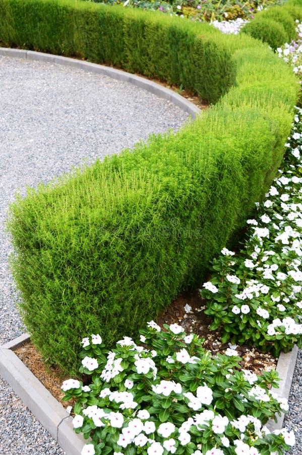Projeto bonito da jarda Camas e conversão de florescência de flor Flores e arbustos decorativos na jarda fotos de stock