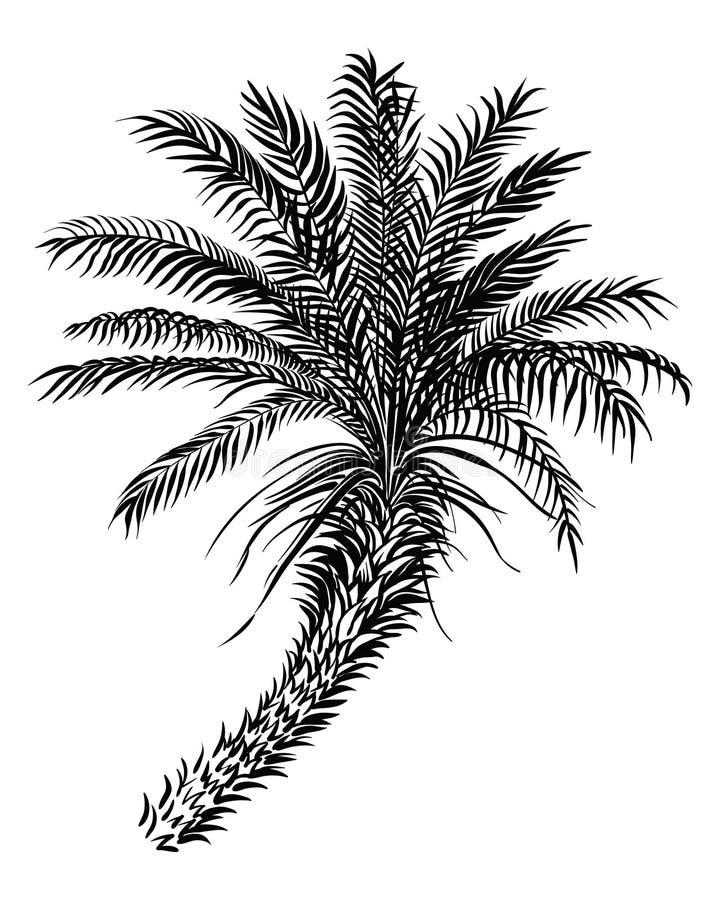 E r vector illustratie
