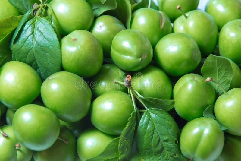 Alcha 新鲜的有机绿色李子特写镜头堆背景的 里面质量和自然给与生命绿色酸李子等离子 免版税图库摄影