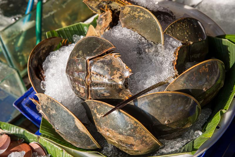 许多新鲜的皮条客在海鲜市场上被卖 r 辣鲎蛋沙拉,皮条客蛋沙拉 泰国海鲜 免版税图库摄影