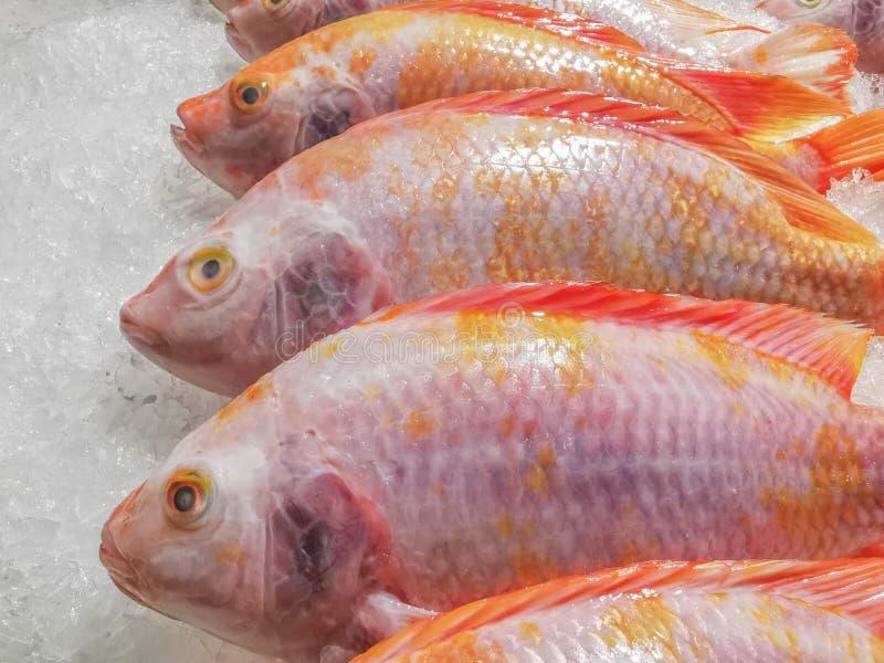 De verse robijnrode vissen leggen op de ijsvloer, Verse voedselafdeling in warenhuizen, De verse die vis voor het winkelen, Visse stock foto