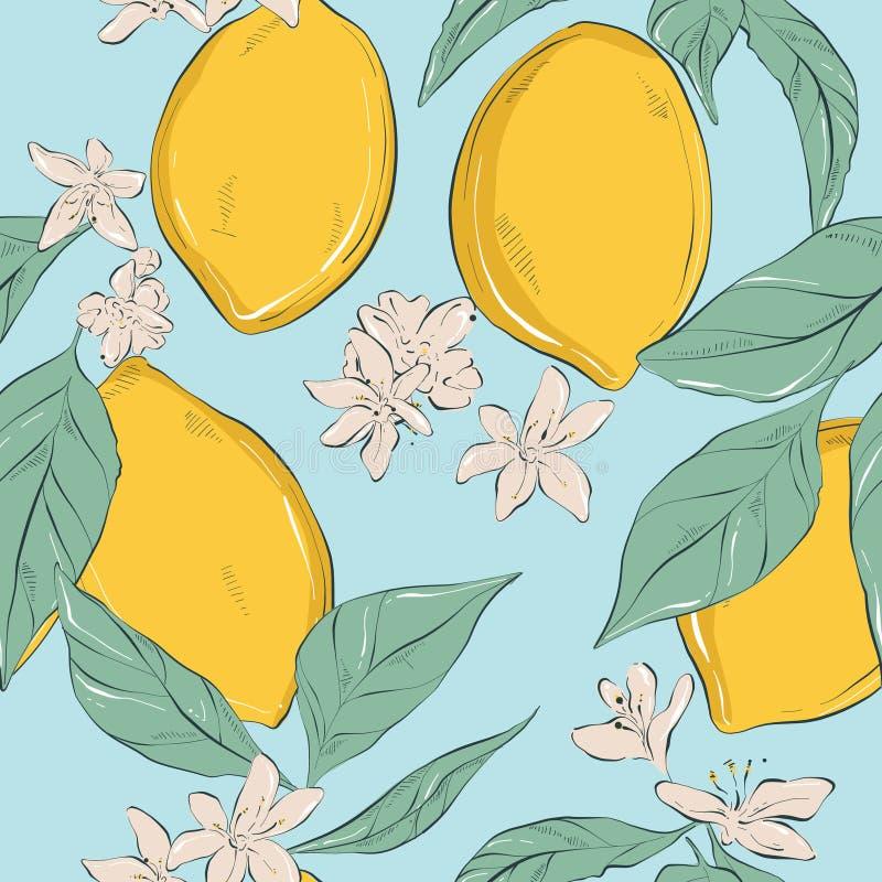 柠檬背景 与花和叶子的传染媒介手拉的果子样式 有机植物的样式 minimalistic汁液的自然 库存例证