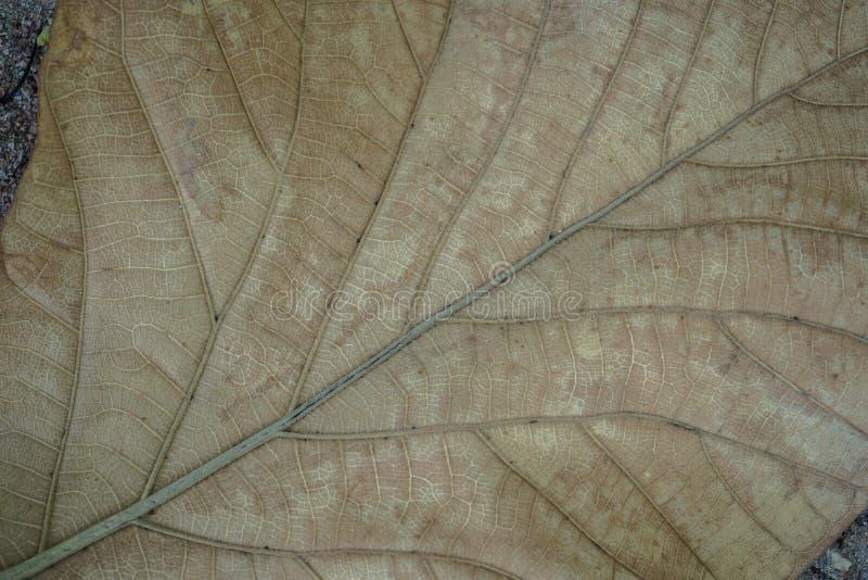 关闭一片死的叶子 关闭有许多静脉的一片黄色死的叶子 它可以使用作为背景影像 库存照片
