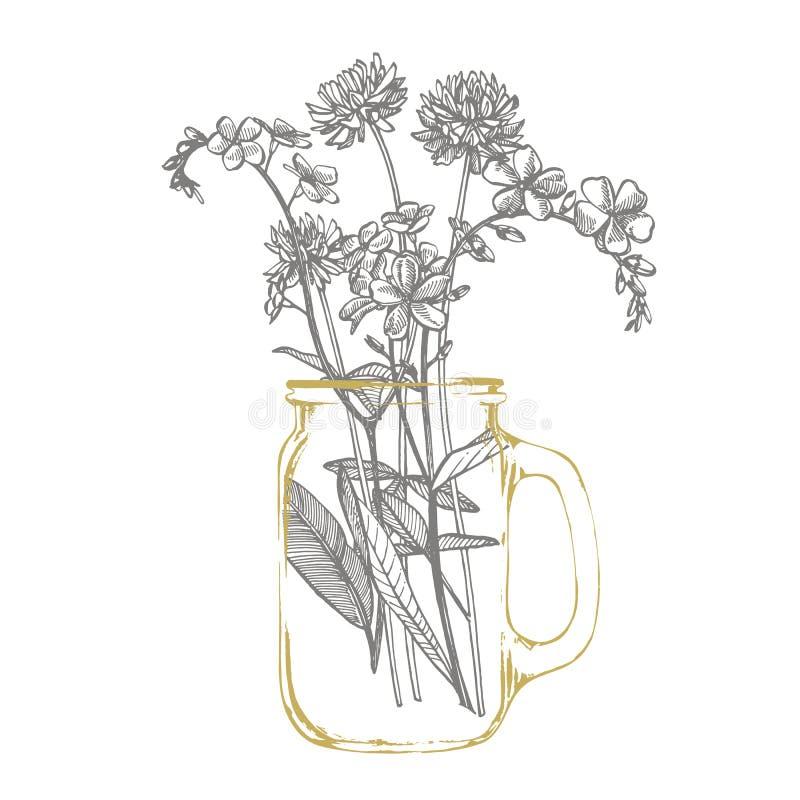 Ramo de planta selvagem Esquece-me-não e Clover Ilustração gravada por Vintage Bouquet de flores e ervas desenhadas à mão Botânic ilustração stock