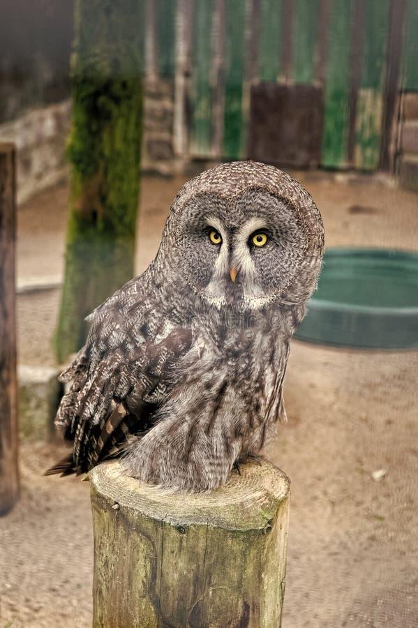 Sauvez un oiseau, sauvez-vous Petit oiseau de chouette aux grands yeux et bec de faucon Oiseau de Chouette perché dans une cage d photo stock