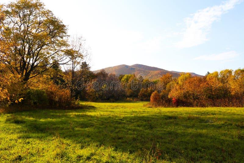 Herfstbos en weide natuur Levendige ochtend in kleurrijk bos met veld Natuurgebied met zonlicht royalty-vrije stock foto's
