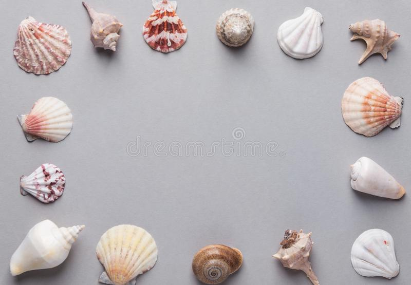 Contexte estival nautique Cadre à partir de coquillages de mer de formes et de couleurs différentes sur fond de pierre grise Élég photographie stock libre de droits
