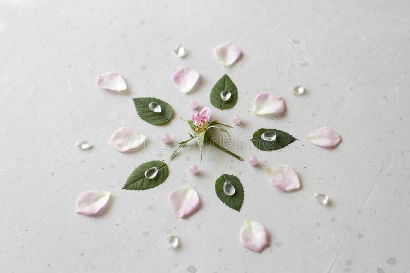 Цветовая мандала на сером фоне Геометрический цветочный состав Роза лежала на лепестках Камни роз кварц и рок стоковое изображение rf