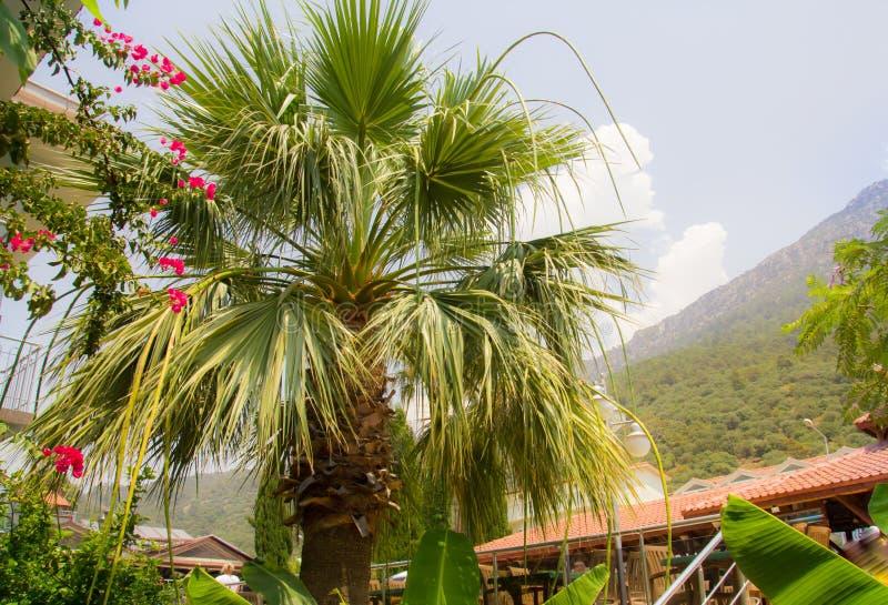 天山背景绿棕榈树 花 明亮的绿地和屋顶 夏季炎热 节假日 免版税库存图片