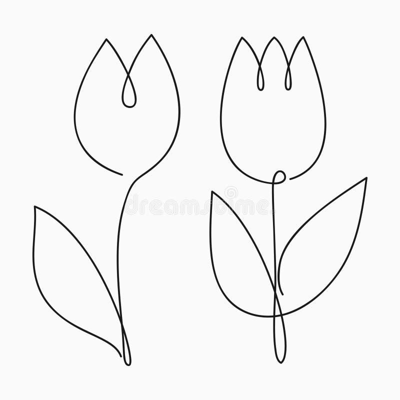 Tulizuj rysunek liniowy Kwiat liniowy ciągły Ilustracja wektorowa ilustracji