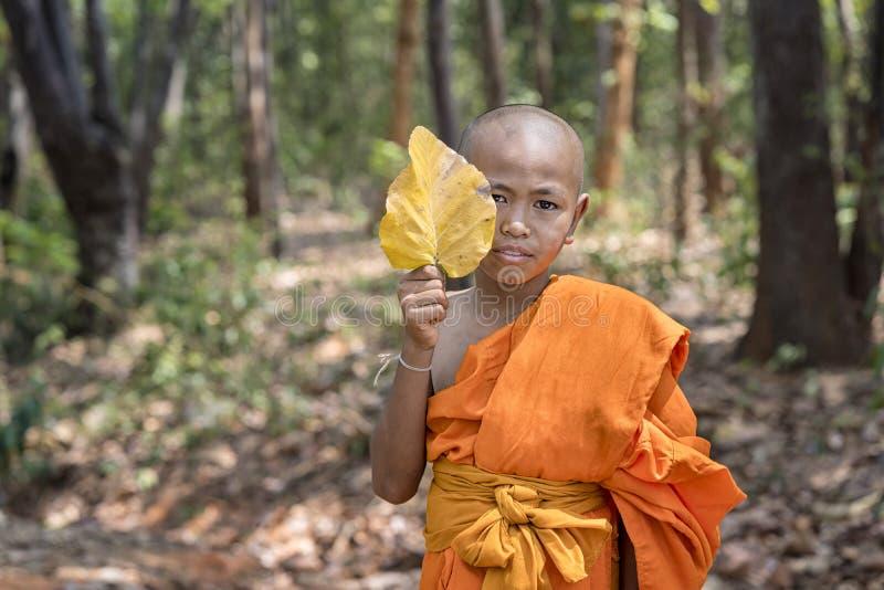 De beginners houden de bladeren van de boom Jonge Boeddhistische beginners in bos in oude tempel in zonsondergangtijd thailand stock afbeelding