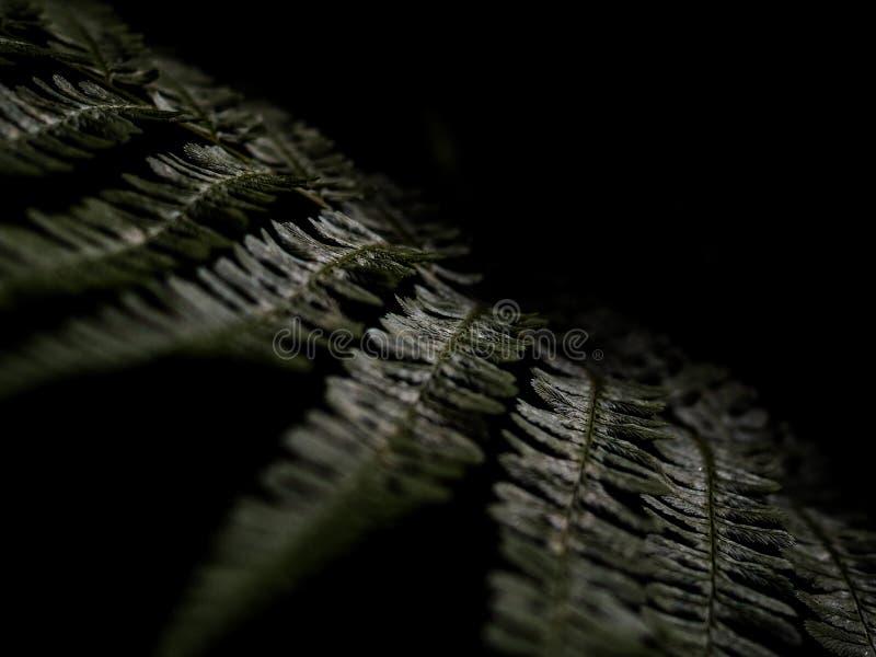 E r tropisk fern royaltyfri fotografi