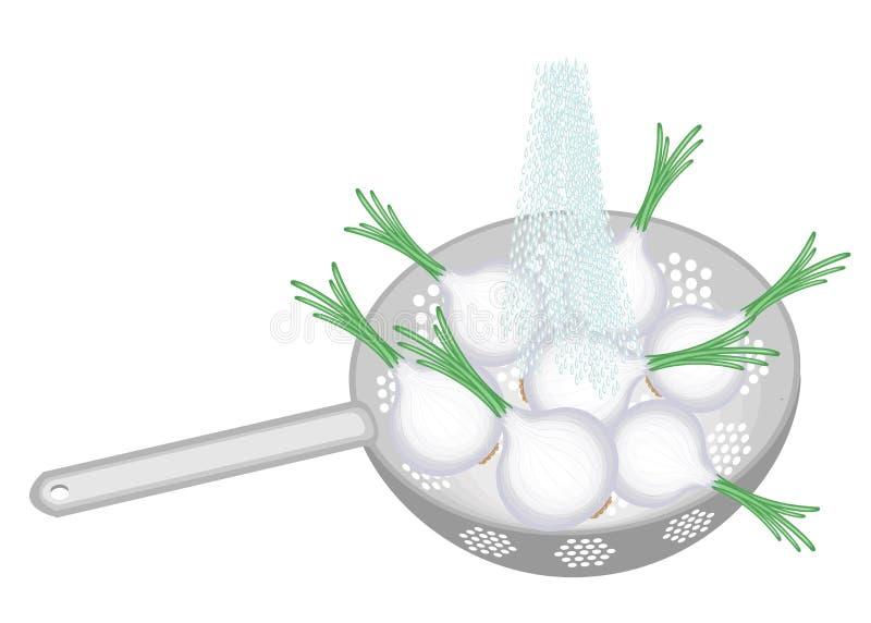 Les légumes frais sont lavés sous l'eau courante Dans une colandre un oignon mûr Les légumes collectés devraient être mangés prop illustration de vecteur