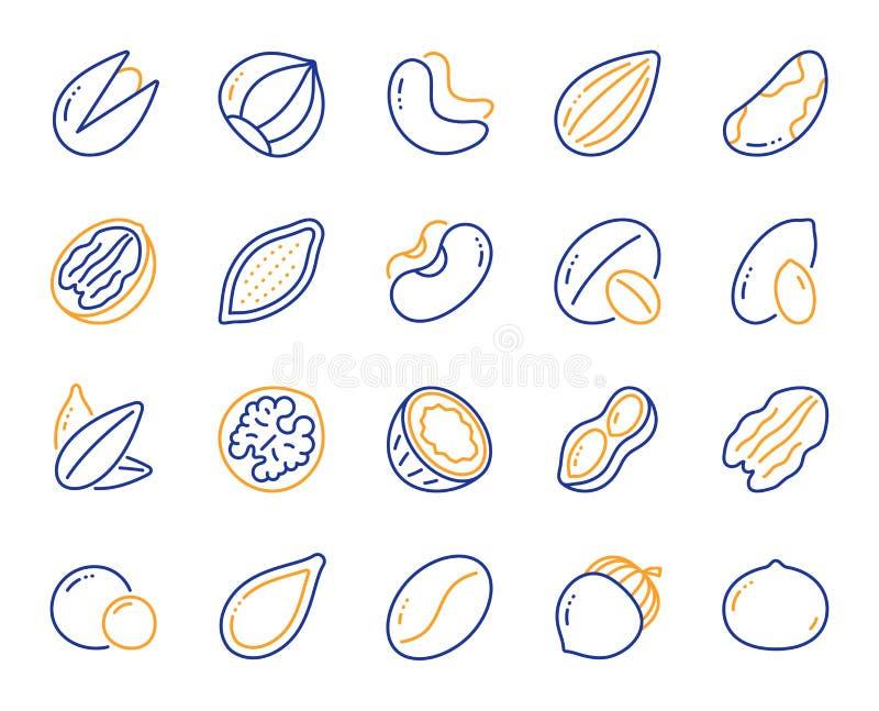Noten en zaadlijniconen Hazelnut, amandelnoot en pinda's Vector stock illustratie
