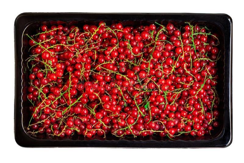 Airelas de groselha vermelha numa caixa preta isolada sobre fundo branco Capa de corrente fresca Colheita, Conceito de alimento V foto de stock