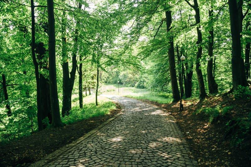 Mooie parkweg omgeven door groene bomen Kleurrijk landschap Weg in het bos royalty-vrije stock foto's