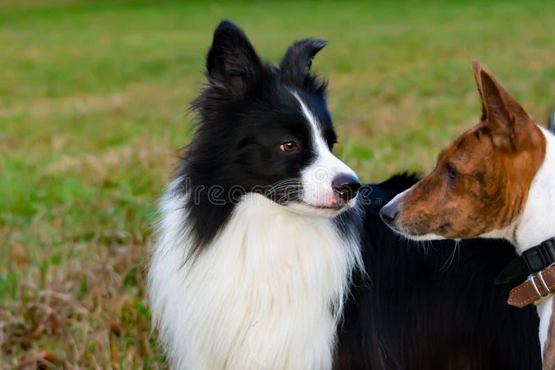 E Relacionamento harmonioso com o cão: educação e formação fotos de stock royalty free