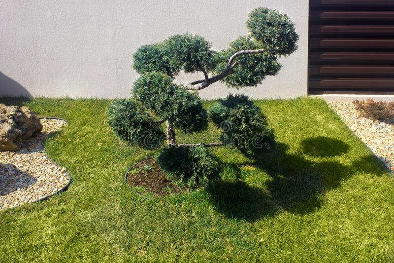 E ?rvore podada nuvem do topiary fotos de stock royalty free