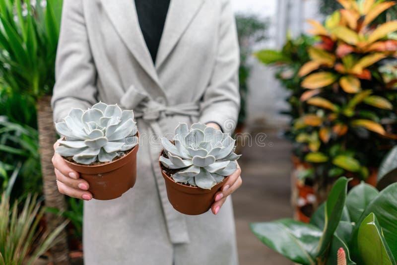 E Selektiver Fokus auf Succulents in den T?pfen in den H?nden der Frau Kaufende Anlagen lizenzfreie stockfotos