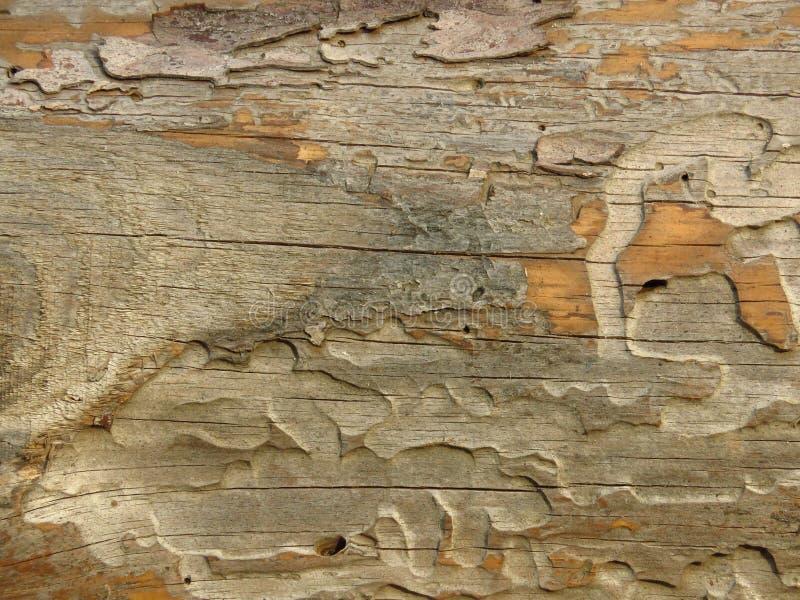E Sprucket wood br?de arkivfoto