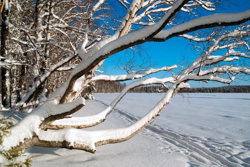 E Styczeń 33c krajobrazu Rosji zima ural temperatury Rosja Leningrad region fotografia royalty free