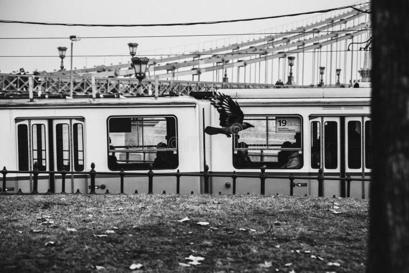 E E svart white fotografering för bildbyråer