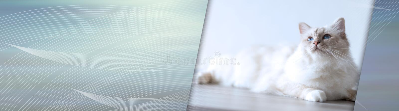 E sztandar panoramiczny zdjęcia stock