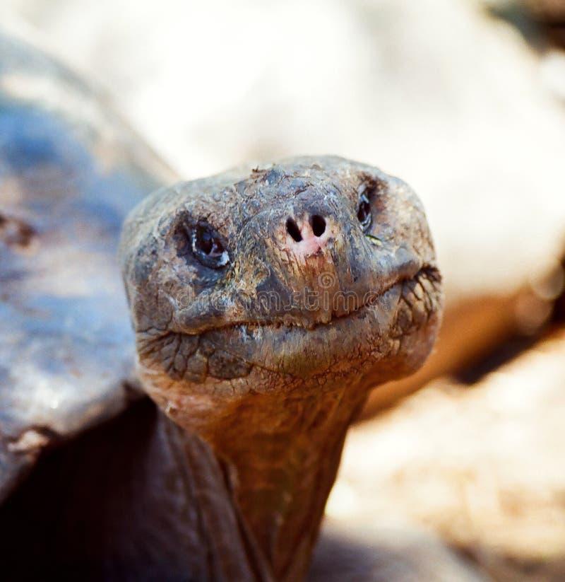 E.T. tortuga formada de las Islas Gal3apagos fotografía de archivo