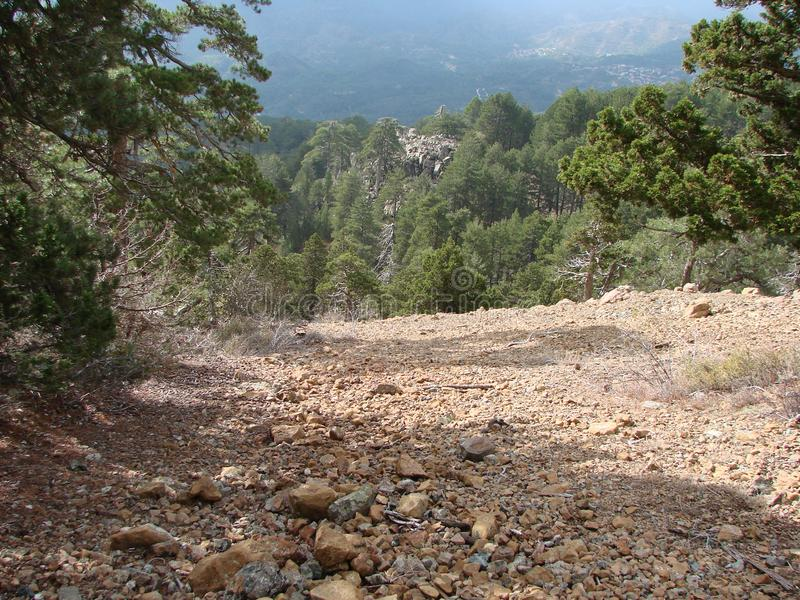E Troodos? 狂放的山森林全景高度的1900海拔米 图库摄影