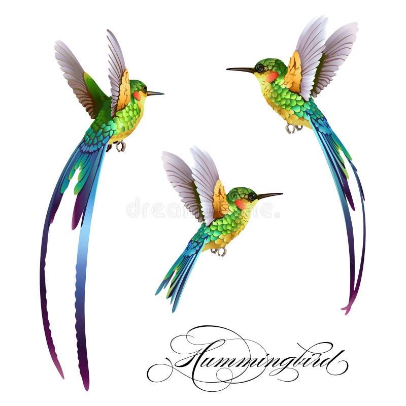 E Tropisch naadloos patroon met vogel Vector illustratie stock illustratie