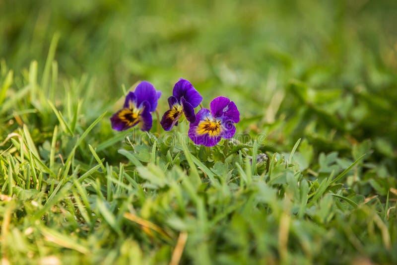 E V?ren blommar i gr?s arkivfoto