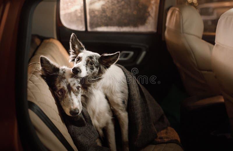 E Viaje con los animales domésticos imágenes de archivo libres de regalías