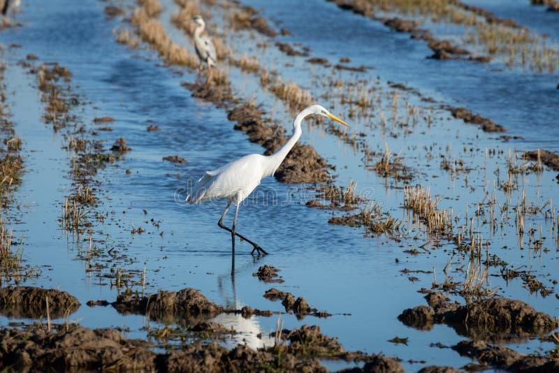 E Wild lebende Tiere in der Natur lizenzfreie stockfotografie