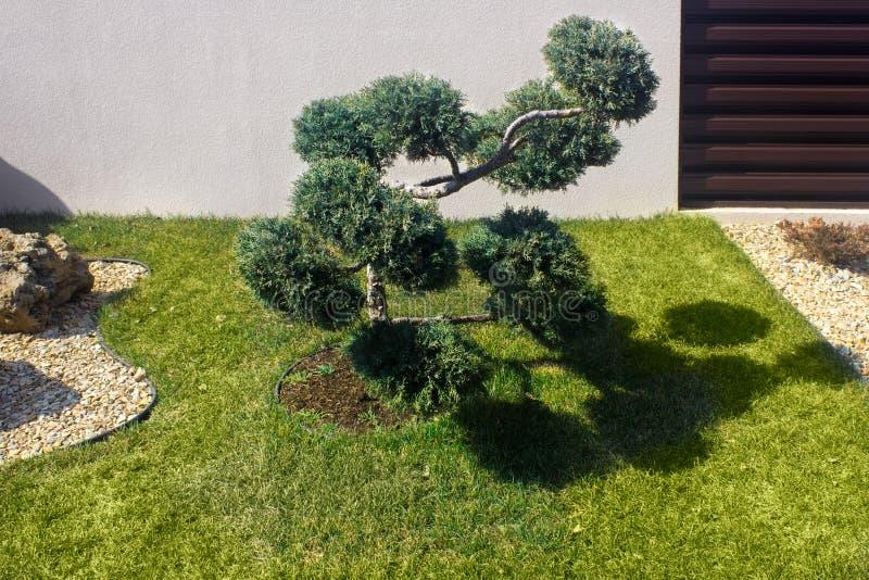 E Wolke beschnittener Topiarybaum lizenzfreie stockfotos