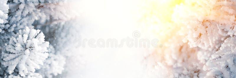 E Zimy Bo?enarodzeniowy sceniczny t?o Śniegu krajobraz z świerczyn gałąź zakrywać z śniegiem i światłem słonecznym przez fotografia stock
